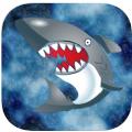 不要碰鲨鱼